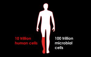 Kroppsceller vs tarmbakterier
